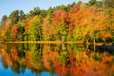 Colorful foliage reflections in pond water on a sunny autumn day in New England - 291400858