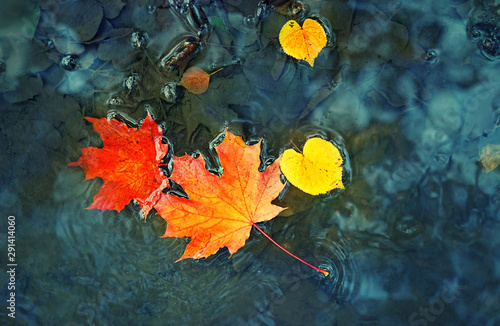bright maple leaves in a puddle Fototapet