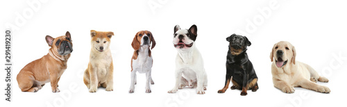 Set of adorable dogs on white background Fototapet