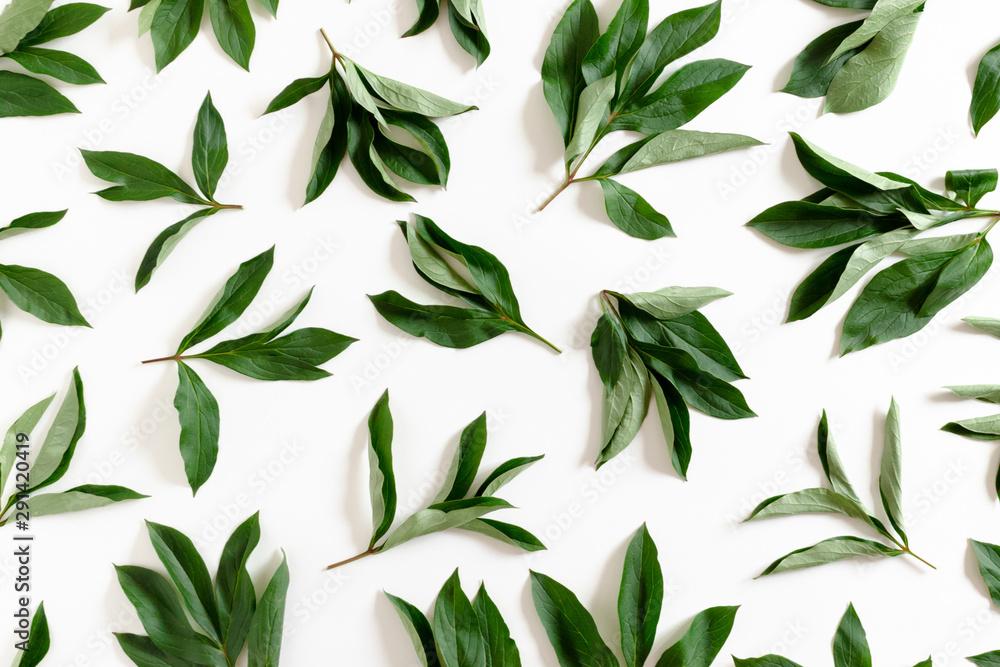 Fototapeta Pattern made from green leaves on white background