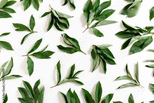 Pattern made from green leaves on white background Fototapeta