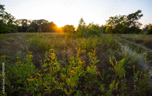 Poster Jardin summer prairie with flowers at the sunset