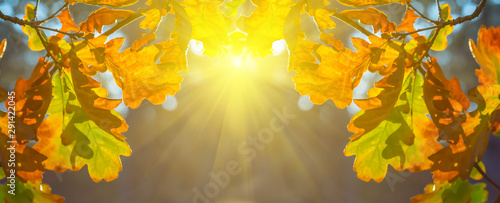 Foto auf AluDibond Orange sparkle sun push through the red dry oak tree branch, good autumn outdoor background