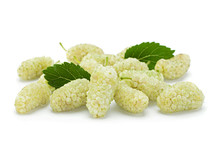White Mulberry With Leaf