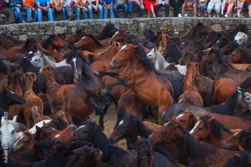 Papel de parede A Rapa das Bestas, Sabucedo, Pontevedra, Galicia