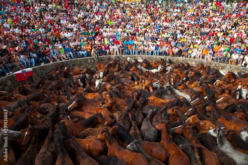 A Rapa das Bestas, Sabucedo, Pontevedra, Galicia Slika na platnu
