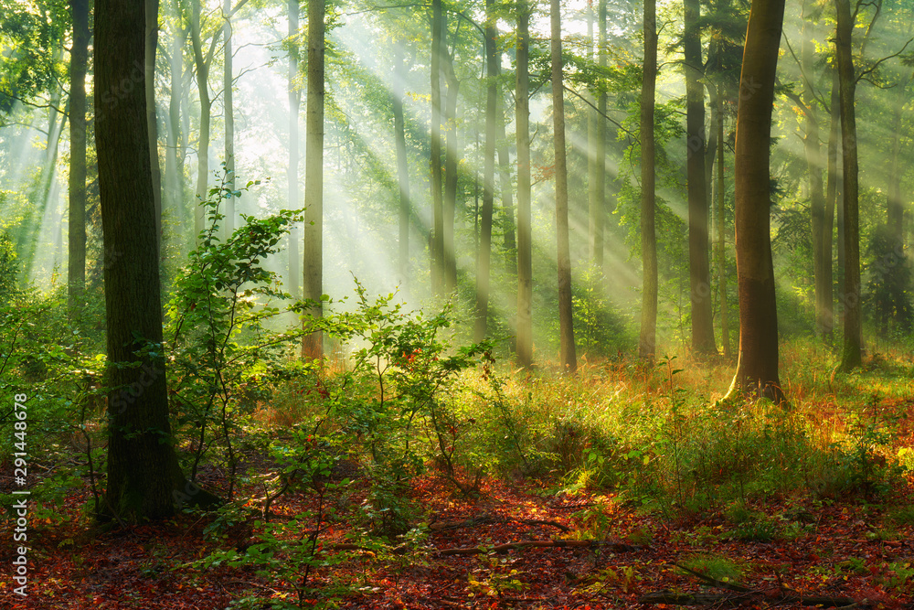 Fototapety, obrazy: Beautiful morning in the forest