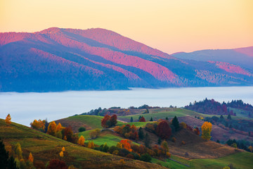 Fototapeta Krajobraz magical sunrise in mountains. valley full of fog. beautiful autumn scenery. trees in colorful foliage. idyllic atmosphere of carpathian countryside