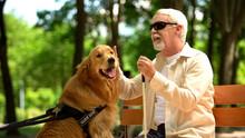 Elderly Blind Man Stroking Guide Dog, Sitting On Bench, Caring Favorite Pet