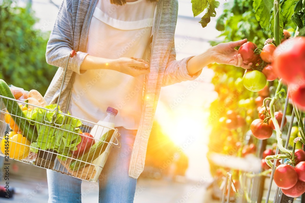Fototapety, obrazy: Woman carrying basket while buying and picking tomatoes in greenhouse with yellow lens flare in background