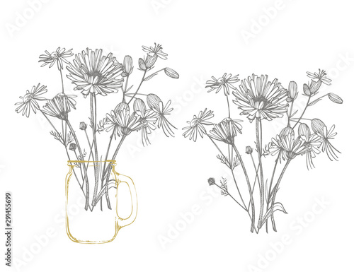 Blue Cornflower Herb or bachelor button flower bouquet isolated on white background. Set of drawing cornflowers, floral elements, hand drawn botanical illustration Wall mural