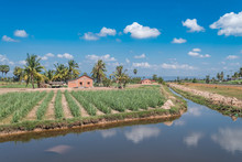 Agriculture In Kampot Province, Cambodia