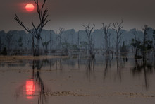 Dramatic Sunset Over A Floading Forest, Siem Reap, Cambodia