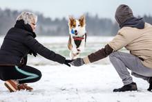 Süßer Hund Springt über Die...