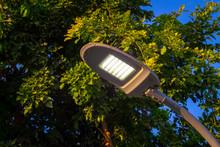 Street LED Lighting In The Garden, Iron Pole.