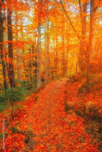 Fotobehang Baksteen Path in natural park with autumn trees. Sunny autumn picturesque forest landscape with sunlight. Fall trees with colorful leaves background. Forest scenery fall leaves gold foliage road, warm light.