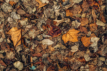 Texture Of Dry Dead Autumn Leaves On The Ground
