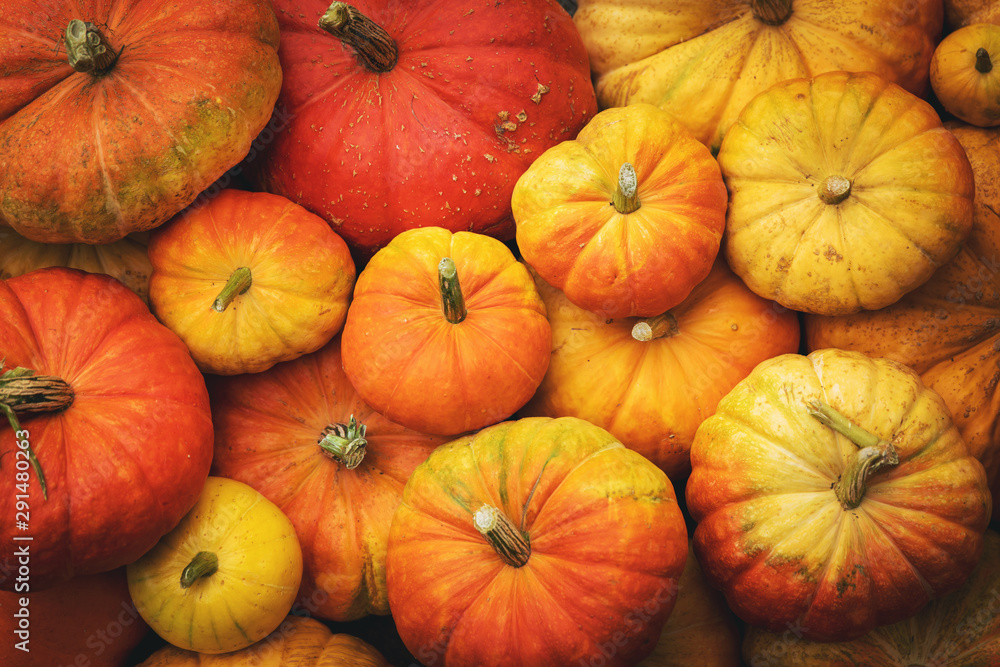 Fototapety, obrazy: autumn harvest background - group of pumpkins. top view