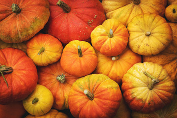autumn harvest background - group of pumpkins. top view