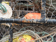 Close Up Detail Of West Coast Crab Traps