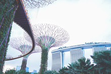 SINGAPORE - J15 September 2019: Walkway At The Supertree Grove At Gardens By The Bay In Singapore Near Marina Bay Sands Hotel At Summer Night.