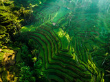 Bali, Indonesia. Aerial drone view. of Rice Terrace at Tegalalang