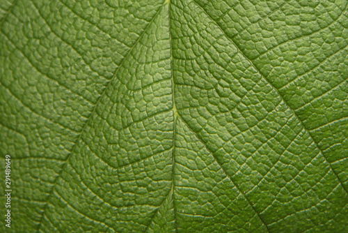 Fotomural  Tree green leaf close up, macro texture