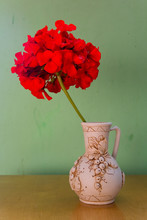 Beautiful Flowers Of Red Geranium In A Ceramic Pot.