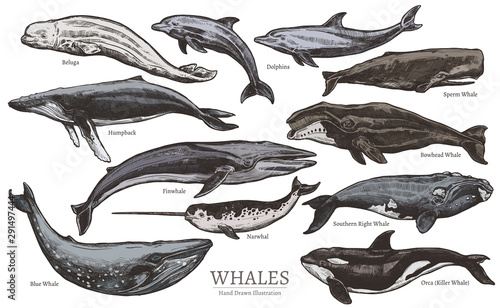 Obraz na plátne Whales color sketch set