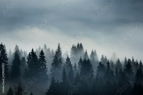 Obraz coniferous trees in the fog in the highlands. Vintage style photo. - fototapety do salonu