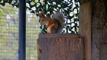 Fluffy Squirrel Sitting On A T...