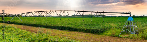 Irrigation sprinkler in agriculture land. Sunset panoramic image.