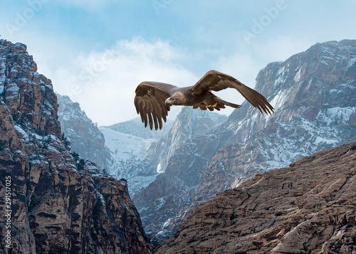 Printed kitchen splashbacks Eagle Golden Eagle (Aquila chrysaetos) in Flight Over Snow-Dusted Mountains...Some Native Peoples Believe the Eagle can Take Your Dreams to Heaven