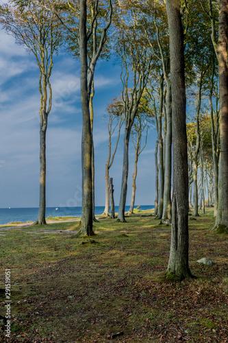Fototapeta Wunderschöner Spaziergang am Gespensterwald an der Ostseeküste - Nienhagen/Deutschland obraz na płótnie
