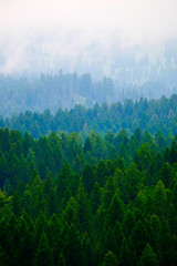 Fototapeta Popularne Stormy Forest in Mountains Clouds and Fog Weather