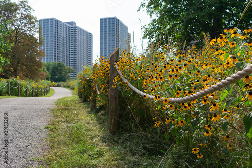 Yellow Flowers lining a Rope Fence Path along the Lakefront Trail at a Park in Uptown Chicago with Residential Buildings