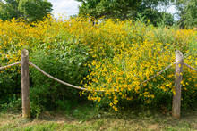 Beautiful Rope Fence With Yellow Flowers And Plants At A Park Along The Lakefront Trail In Uptown Chicago