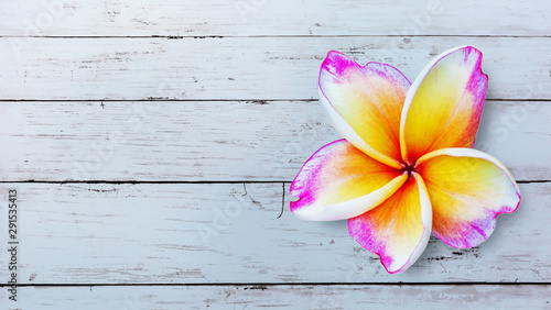 Poster Plumeria Leelawadee flower isolated