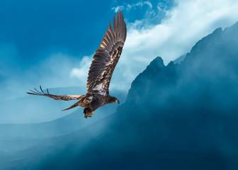 Fototapeta Ptaki Bald Eagle Juvenile Over Foggy Mountains...Some Native Peoples Believe the Eagle can Take Your Dreams to Heaven