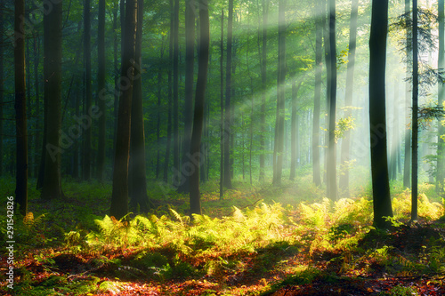 Photo sur Aluminium Arbre Beautiful morning in the forest