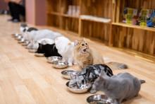 猫 みんなでお食事タ...