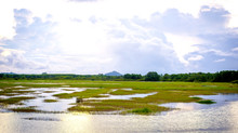 Landscape Of Swamp , With Natu...