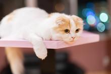 猫カフェの猫たち