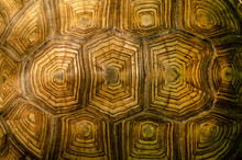 African Spurred Tortoise Shell Texture Detail.