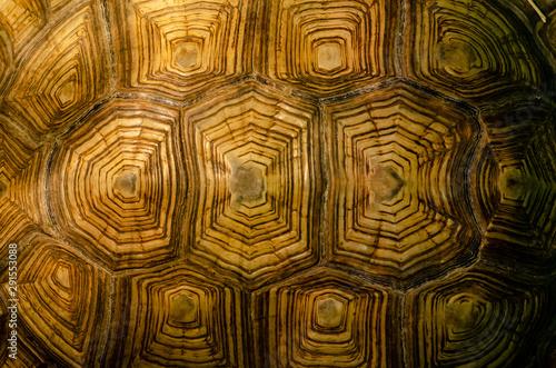 Fototapeta African spurred tortoise shell texture detail. obraz