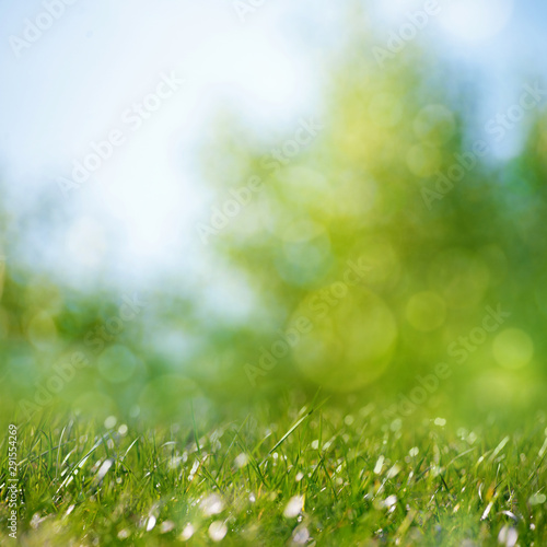 Keuken foto achterwand Lente Beauty healthy backgrounds with foliage, green grass and bokeh