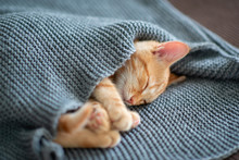 Cute Red Kitten Sleeps On The ...