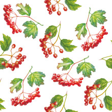 Vector Red Viburnum Opulus - Guelder-rose - Branch With Leaves And Berries - Seamless Pattern.