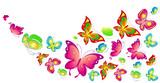 butterfly300
