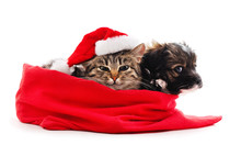 Puppy And Cat In Christmas Bag.